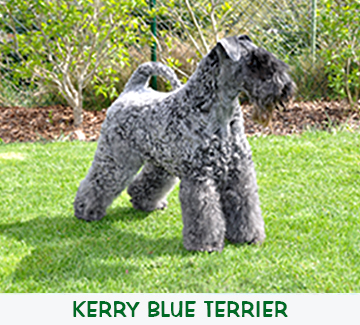 Kerry Blue